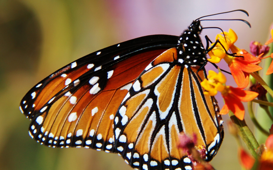 Better Butterfly than Bankrupt. Why Newspapers need to create new products